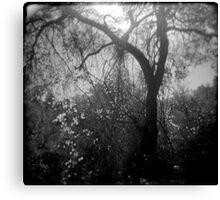 Lightfall Canvas Print