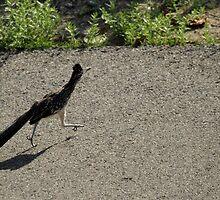 Roadrunner On A .... by DARRIN ALDRIDGE