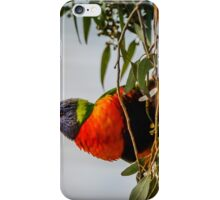 Colors in the Trees iPhone Case/Skin