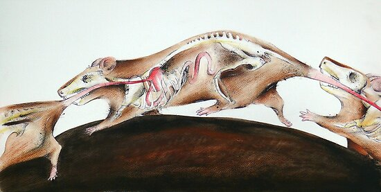 Rats by Kaitlin Beckett