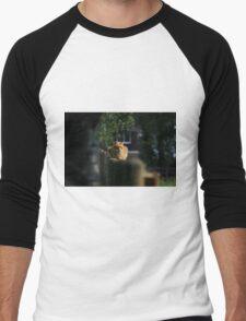 Ginger cat on garden fence Men's Baseball ¾ T-Shirt