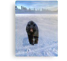 Animal Tracks - Black Bear and Snow Metal Print