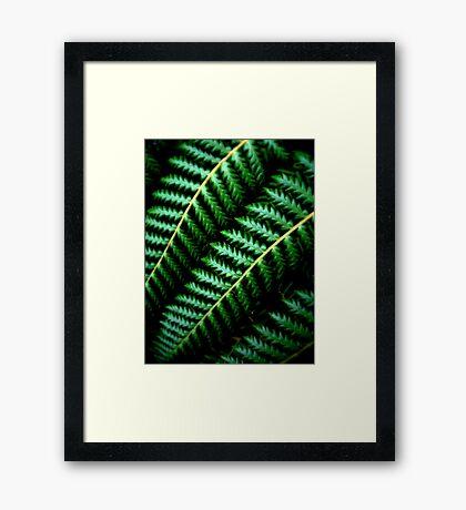 Fern Framed Print