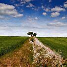Between the fields by Geoff Carpenter