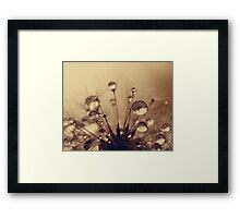 Toffee Drops Framed Print