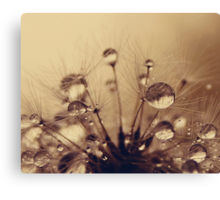 Toffee Drops Canvas Print