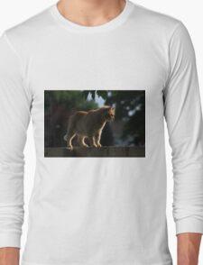 Ginger cat on garden fence Long Sleeve T-Shirt