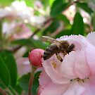 Busy, busy bee by Shelleymay