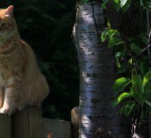 Ginger cat on garden fence Sticker