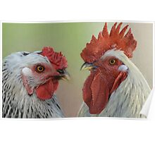 Hen & Rooster Poster
