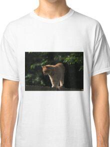 Ginger cat on garden fence Classic T-Shirt