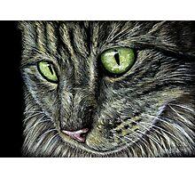 Intense Tabby Cat Pastel Painting Photographic Print