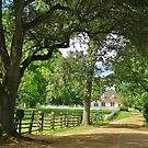 Colonial Williamsburg, Virginia by Alberto  DeJesus