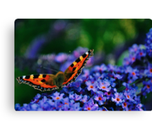 Tortoise Shell Butterfly Canvas Print
