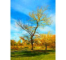 Winter Tree with Golden Branches Photographic Print