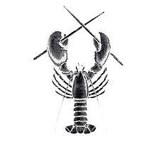 Lobster Rock Photographic Print
