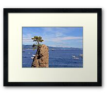 Lonely tree and the blue sea from Portofino Framed Print