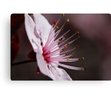 First Blossom Canvas Print