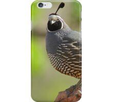 Cool Quail iPhone Case/Skin
