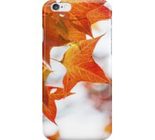 Red maple leaves in autumn iPhone Case/Skin