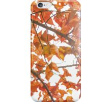 Maple leaves in autumn iPhone Case/Skin