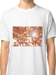 Maple leaves in autumn Classic T-Shirt