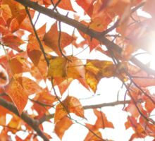 Maple leaves in autumn Sticker