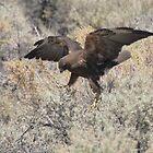Dancing Eagle by SB  Sullivan