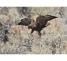 Dancing Eagle Photographic Print