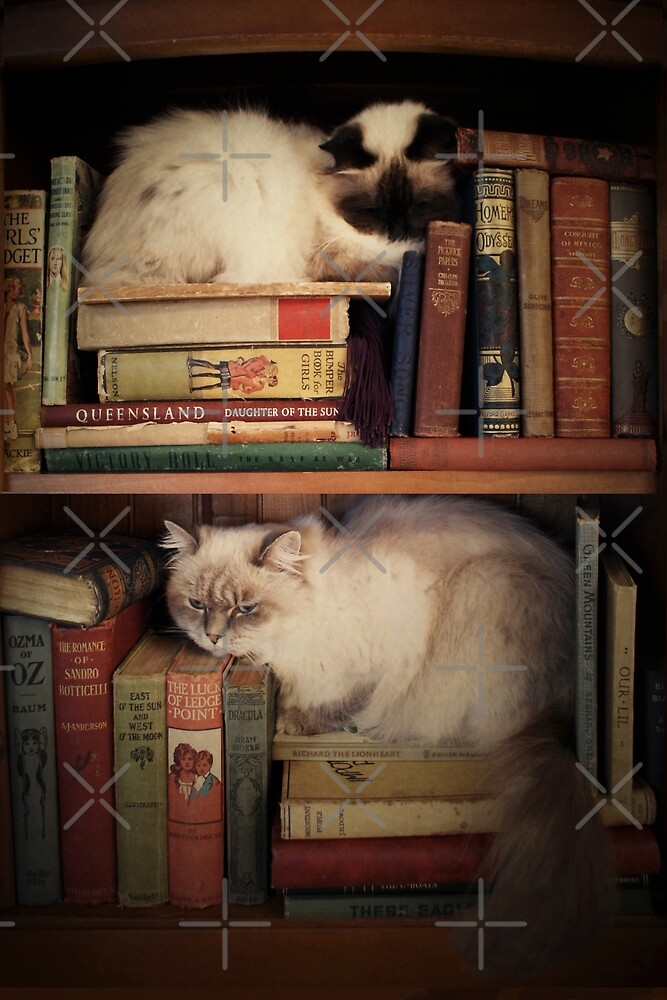 Library Cats by Sarah  Mac