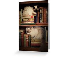 Library Cats Greeting Card