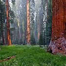 Snow storm in Sequoia National Park by Martin Lawrence