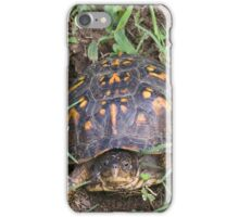 Eastern Box Turtle iPhone Case/Skin