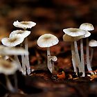 Fungus in the Forest I by Kathleen Daley