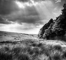 Lyne Park (3) by Neil Cameron