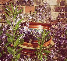 Old Flowerpots & Campanula by SuzyPhoto