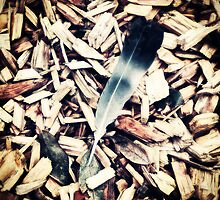 Feather and Wood Chip by SuzyPhoto