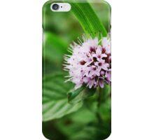Clover Flower  iPhone Case/Skin
