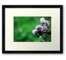 Thistle-in' a Tune Framed Print