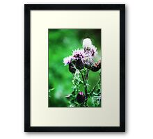Thistle-in' a Second Tune Framed Print
