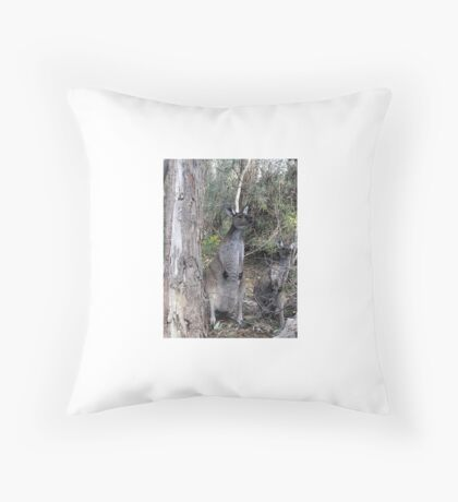 Inquisitive Kangaroos Throw Pillow