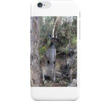 Inquisitive Kangaroos iPhone Case/Skin