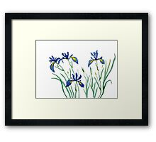 blue iris watercolor painting Framed Print