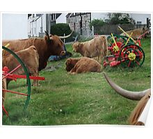 Highland Cows in Duirinish Poster