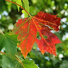 First sign of Autumn by Alberto  DeJesus