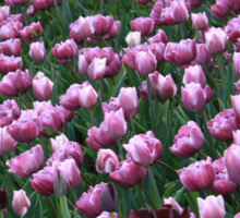 Field of Tulips Sticker