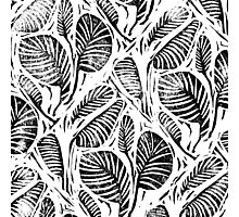 Jungle - Tropical leaves Photographic Print