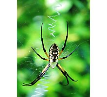 Spider Photographic Print