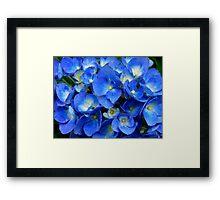 Blue Hydrangea in the Garden    ^ Framed Print