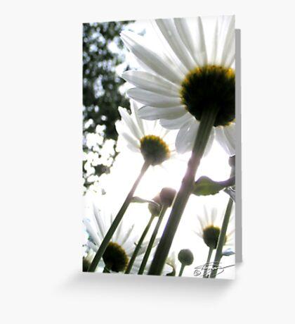 Award Winner - Daisies Greeting Card